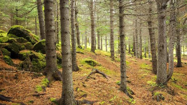 Foreste, un patrimonio nazionale!