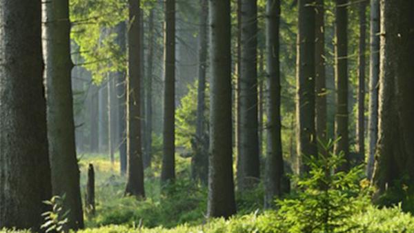 Esiste un piano di rinascita delle foreste italiane