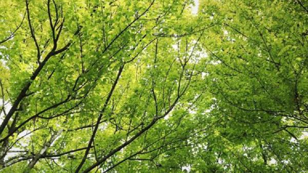 21 Novembre: Giornata Nazionale dell'albero