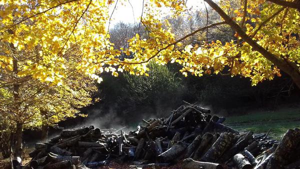 In Italia aumentano i boschi +5% di superficie dal 2005