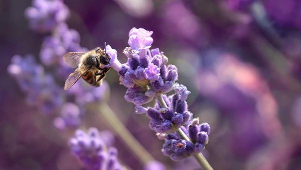 Giornata Mondiale dell'Ambiente, il 5 giugno si celebra la biodiversità!